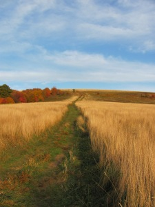 Max Patch by NC Trees Photography - Anita Adams