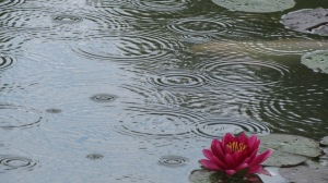 'Rain Circles and Lilly' by NC Trees Photography