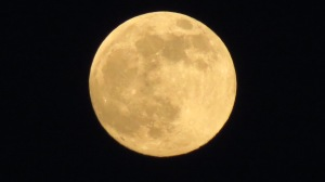 Super Full Moon-June 23 by NC Trees Photography