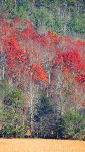 'Fall Colour' Cataloochee Valley Great Smokies National Park by Anita Adams