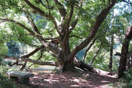Incredible Climbing Tree Beaver Lake ~ Bird Sanctuary by Anita Adams of  NC Trees Photography