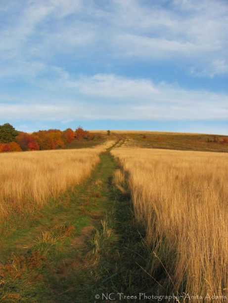 'The Trail at Max Patch' by Anita Adams  of NC Trees Photography'