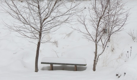 February Snow Cover