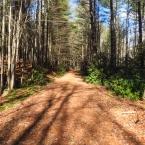 The Upper Arboretum Trail