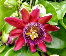 cropped-signed-passion-flower1.jpg