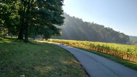 September Morning Walk at the Biltmore