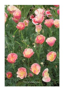 Joyful Flowers by Anita Adams