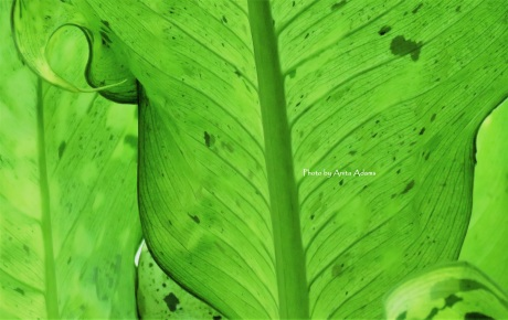 signed-softness-of-green