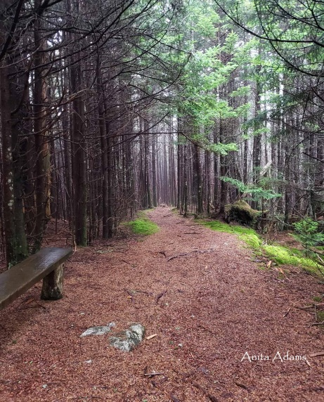 Signed - Magical Balsam Forest BPR