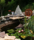 Pond, Frog and Lillies